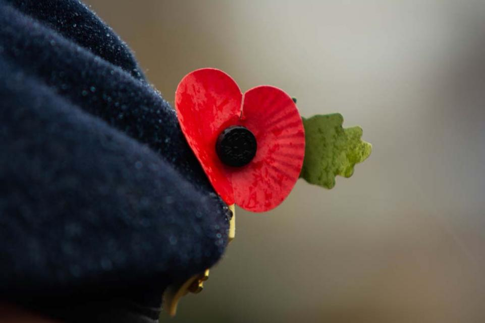 Beret and poppy